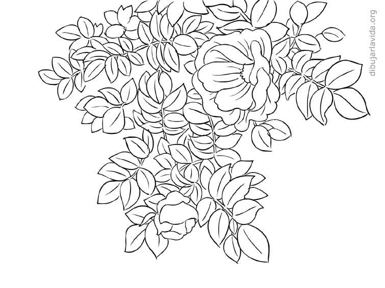 hojas | Dibujar la vida